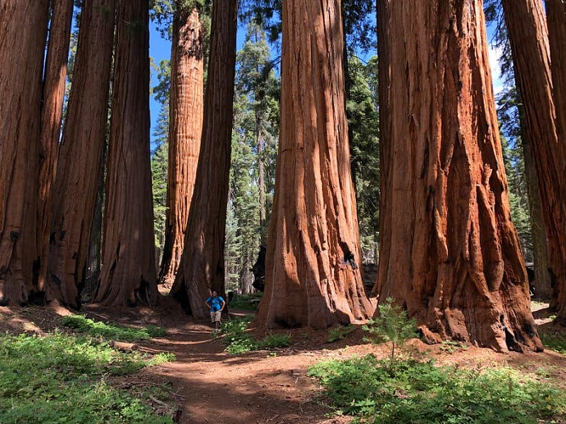 best places to elope in the us - sequoia national park