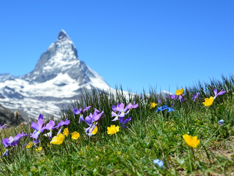 Elopement in Switzerland guide - spring season