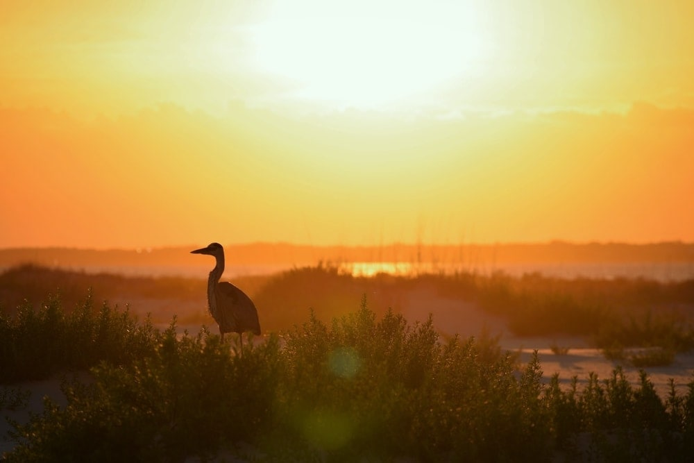 elopement package in the everglades florida