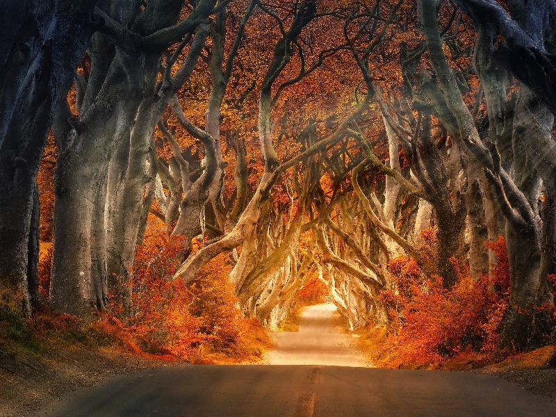 eloping in ireland, the best places - dark hedges