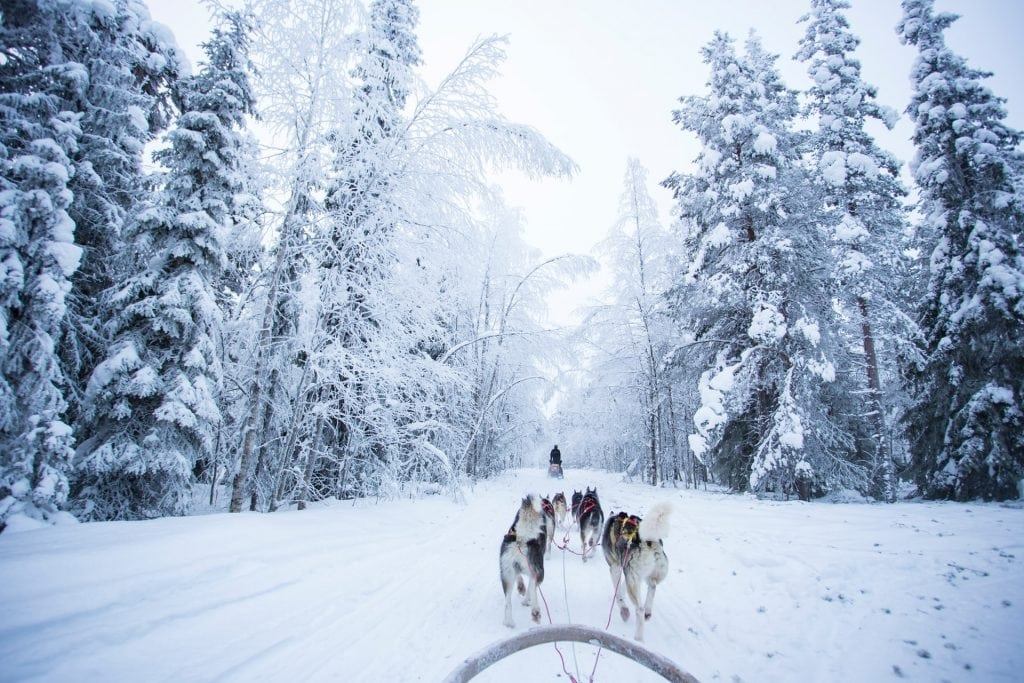 Adventure elopement with a dog sled in finland