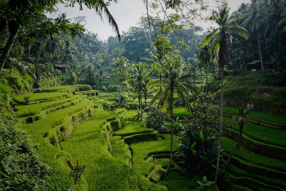 The best places for a bali elopement - ubud