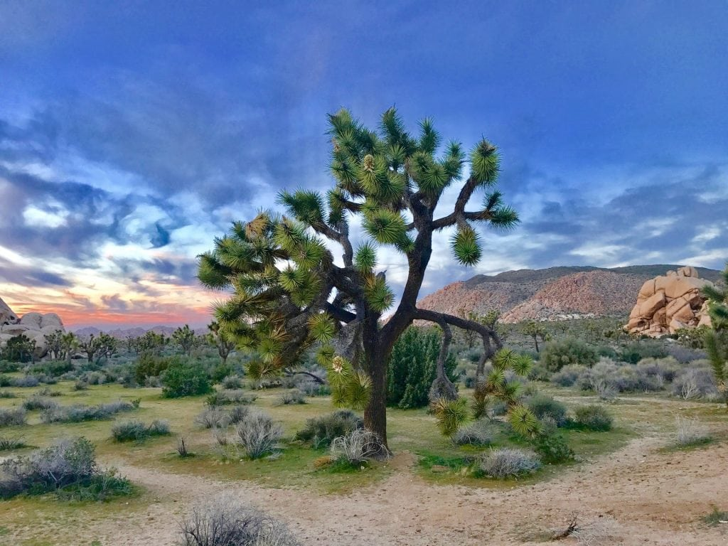 Elopement packages in joshua tree, california