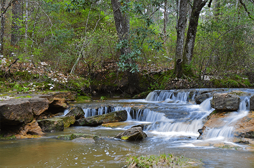 Kisatchie natural forest for an elopement near new orleans