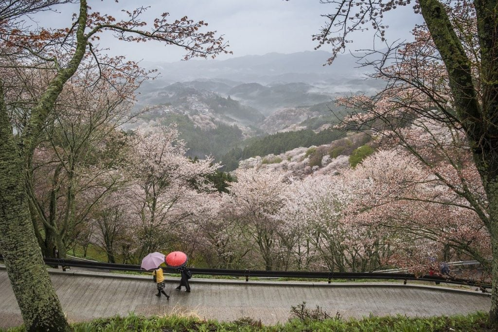 Spring for an elopement in Japan