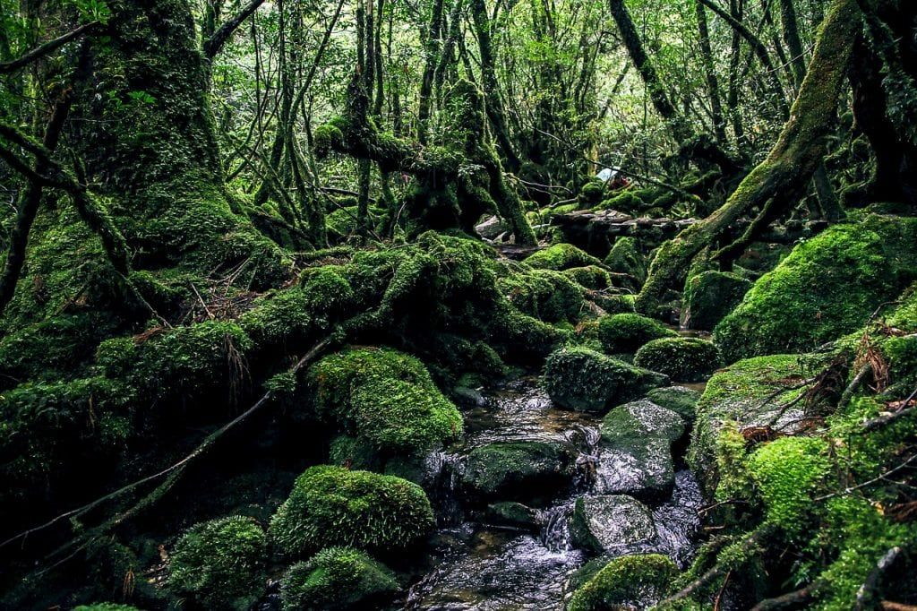 yakushima-island-japan-elopement