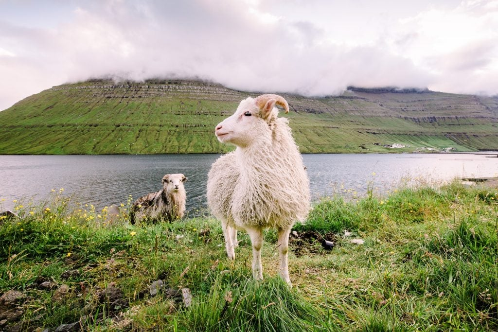 When to elope in the Faroe Islands - spring