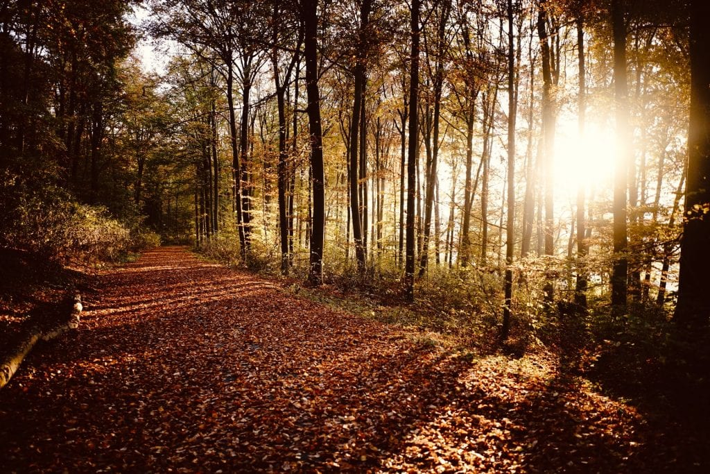 Where to elope in Germany - Barnim Nature Park