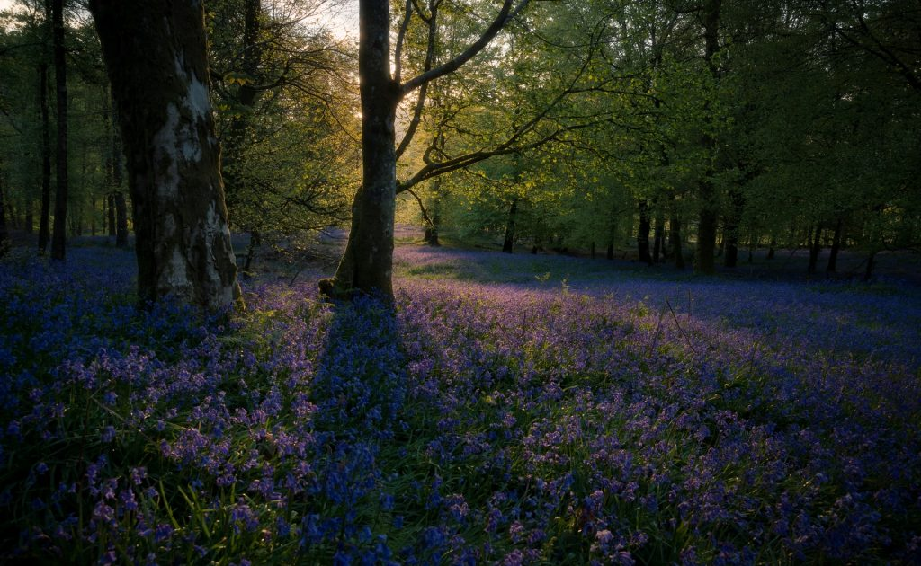 When to elope in the Lake District - spring