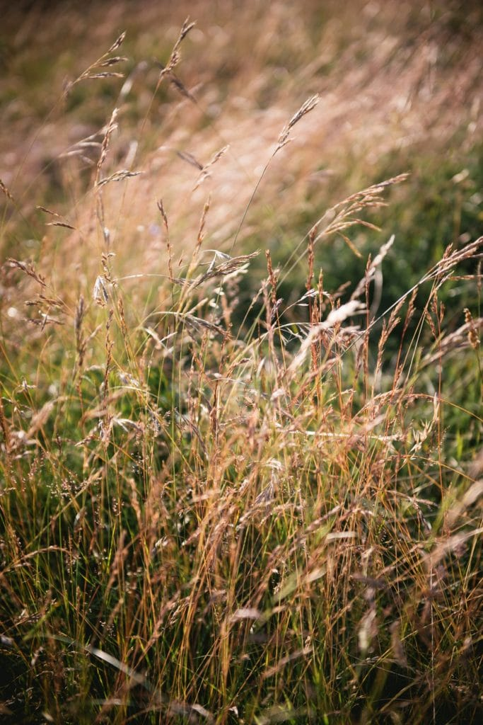 A post-wedding session in Provence - gordes grass