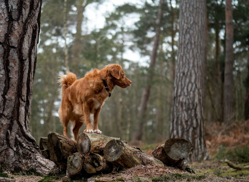 Eloping with your dog - think about the weather